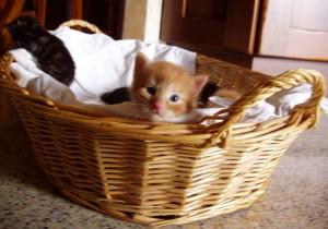 cucciolo curioso