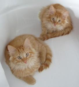 i gatti rossi ;-)