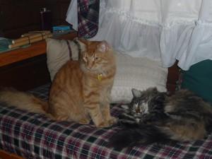 fratelli gatti
