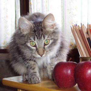 Un gatto tra mele e matite colorate