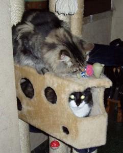 E io gioco con il topino!