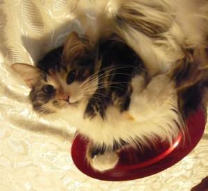 una gatta nel piatto?