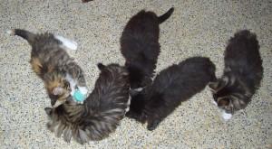 5 gattini giocherelloni