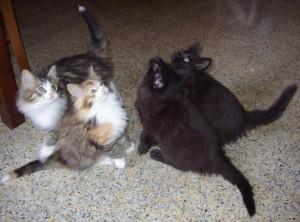 Quattro gattini ;-)