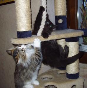 Il gattino e la fune