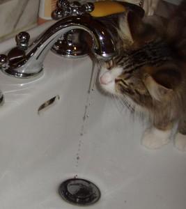 Nuova acqua dal lavandino!