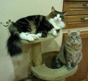 Amori di gatti