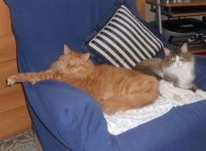 Olaf e Suri grandi teneroni!