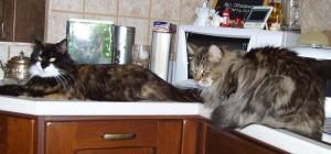 in cucina ;)