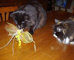 Una mimosa per me?