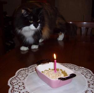 Torta per gatti