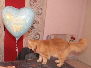 Un cuore per Tisù